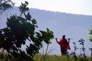 6 Walk Ngorongoro Maasai