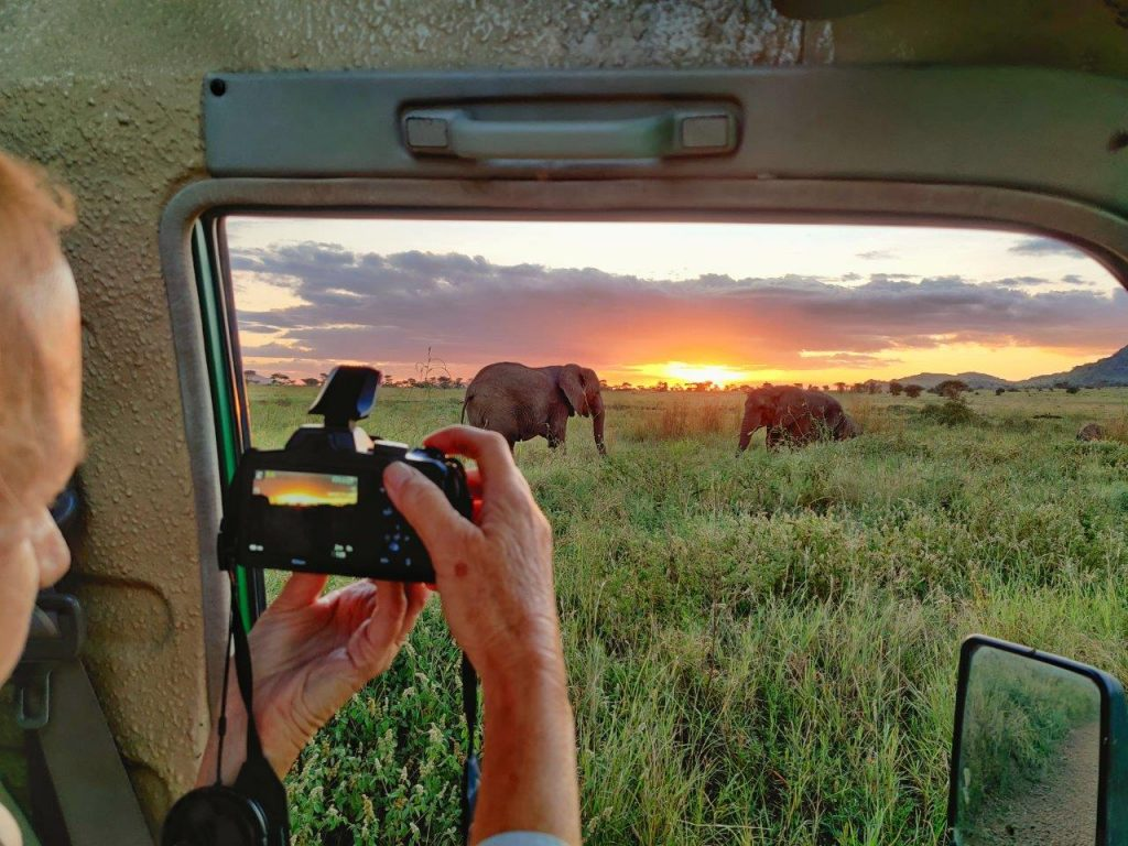 Taking pictures of the Elephants with the sunset